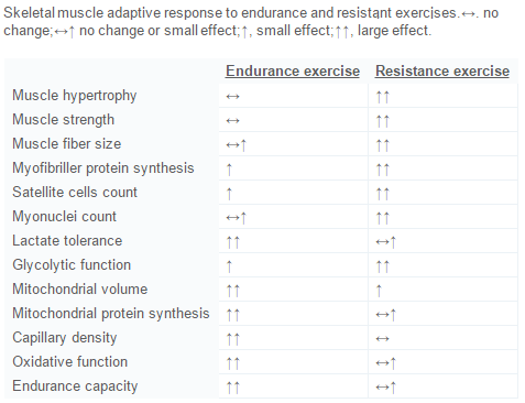 adattamenti muscolari